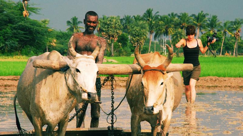 tournage rizières inde