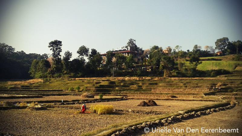 paysages népal