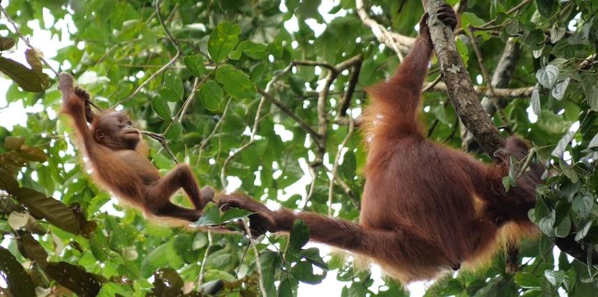 tournage primates bornéo