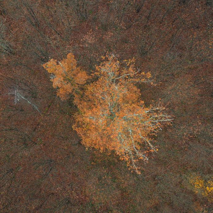 vue drone arbre