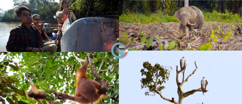 tournage pour une mission scientifique en Malaisie